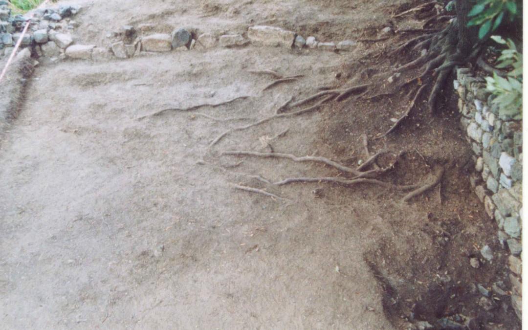 fig.6. L'Area 3000 vista da sud-est poco dopo l'inizio dello scavo: sullo sfondo un muro di pietre di recupero legato a secco di epoca recente, forse per recinzione di un ovile o di un'area di pascolo temporanea.
