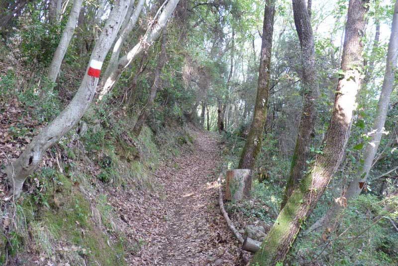 Fig.14. Il sentiero segnato dal CAI nel tratto tra la Brina e l'Amola di Falcinello.