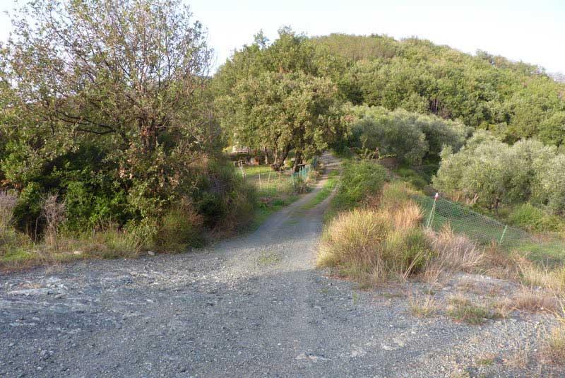fig.8. La strada sterrata vicinale verso la Brina nel punto in cui sta per diventare un sentiero che si   inoltra nel bosco.